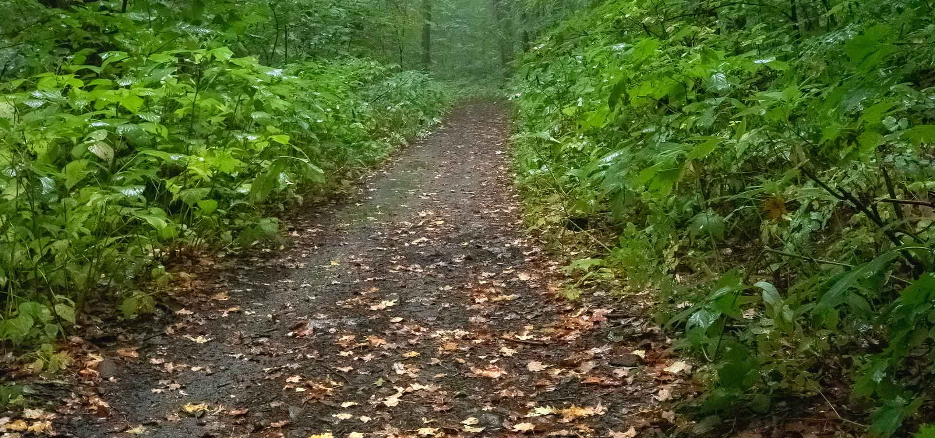 Trail Expansion Effort Continues